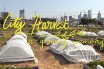City Harvest: A Growing Community
